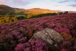 The hills and heathers of Scotland
